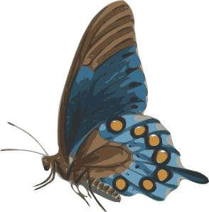 Butterfly Papilio Philenor Side Clip Art 105721 Free SVG Download 4 Vector