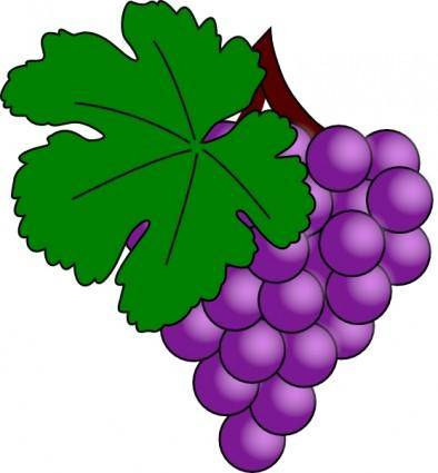 Image result for bunch of grapes icon