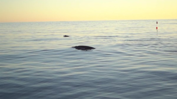 Researchers say new whale species found off Mexico