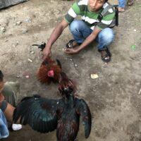 Le marché d'Ubud à Bali et les combats de coq 🐔 !