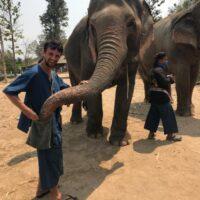 Pourquoi et Où voir des éléphants bien traités en Thailande ?