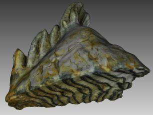 mammoth molar 3dscanning