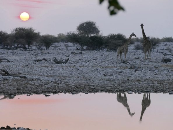 Sunset at the Okaukuejo watering hole