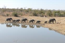 Timbavati, elephants, safari