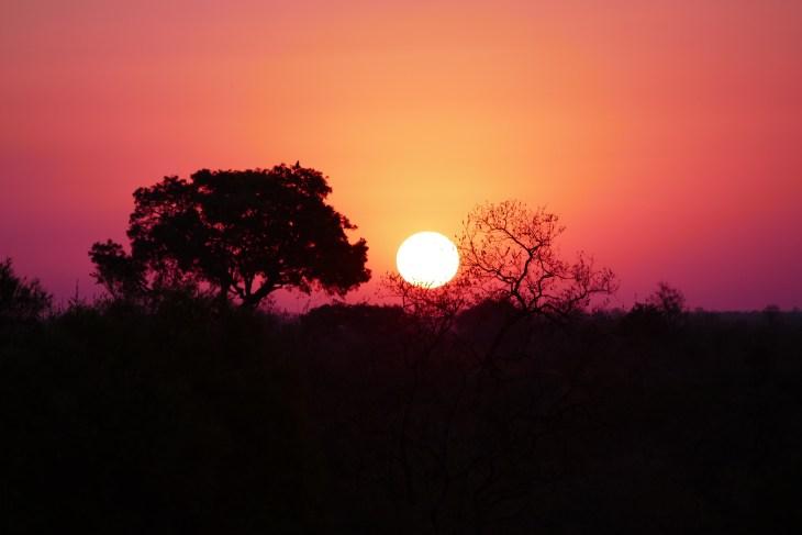 sundowner, safari
