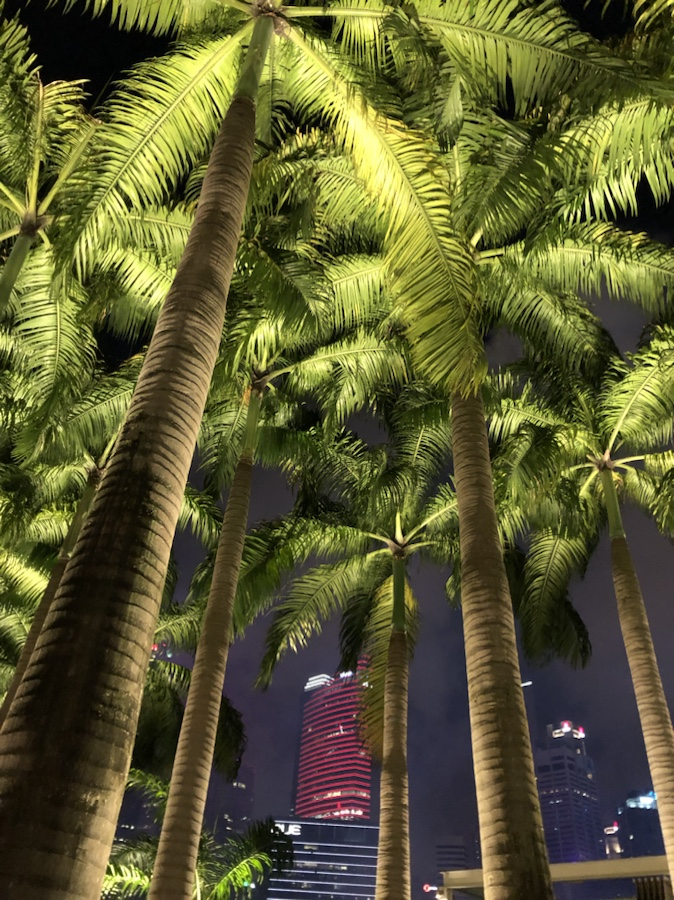 Palm trees at Marina Bay at night