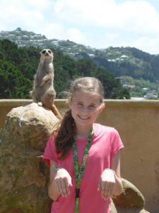 Meerkat encounter at Wellington, NZ zoo