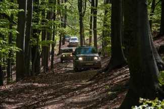 U bukovoj šumi na obroncima Kupinove glave