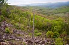 The damage we've seen on Svrljiške mountains was shocking