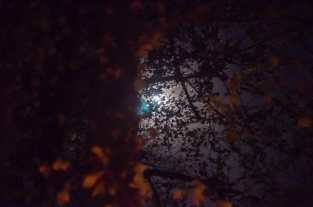 Moon showing through the branches