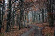 In the depth of Kučaj forests