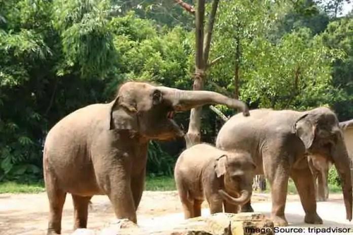 Best Safari Parks