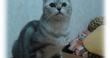 猫咪相簿更新:芭比&麻糬