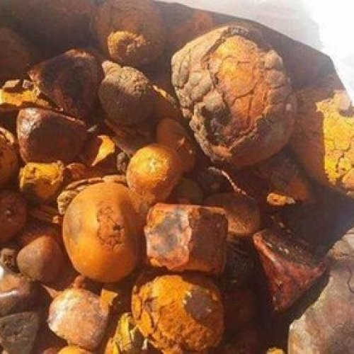 Image result for what is ox gallstones