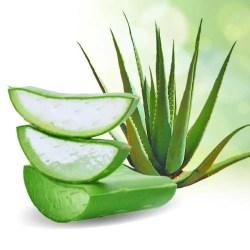 Aloe Vera: 5. Aloe Vera For Staph Infection Remedy