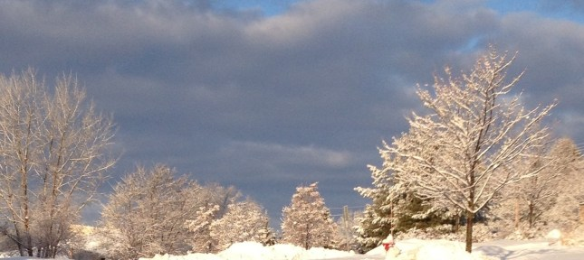 The wonder and beauty of winter!