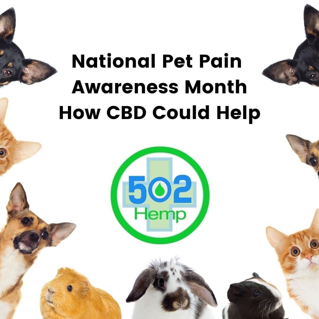 National Pet Pain Awareness Month: How CBD Could Help