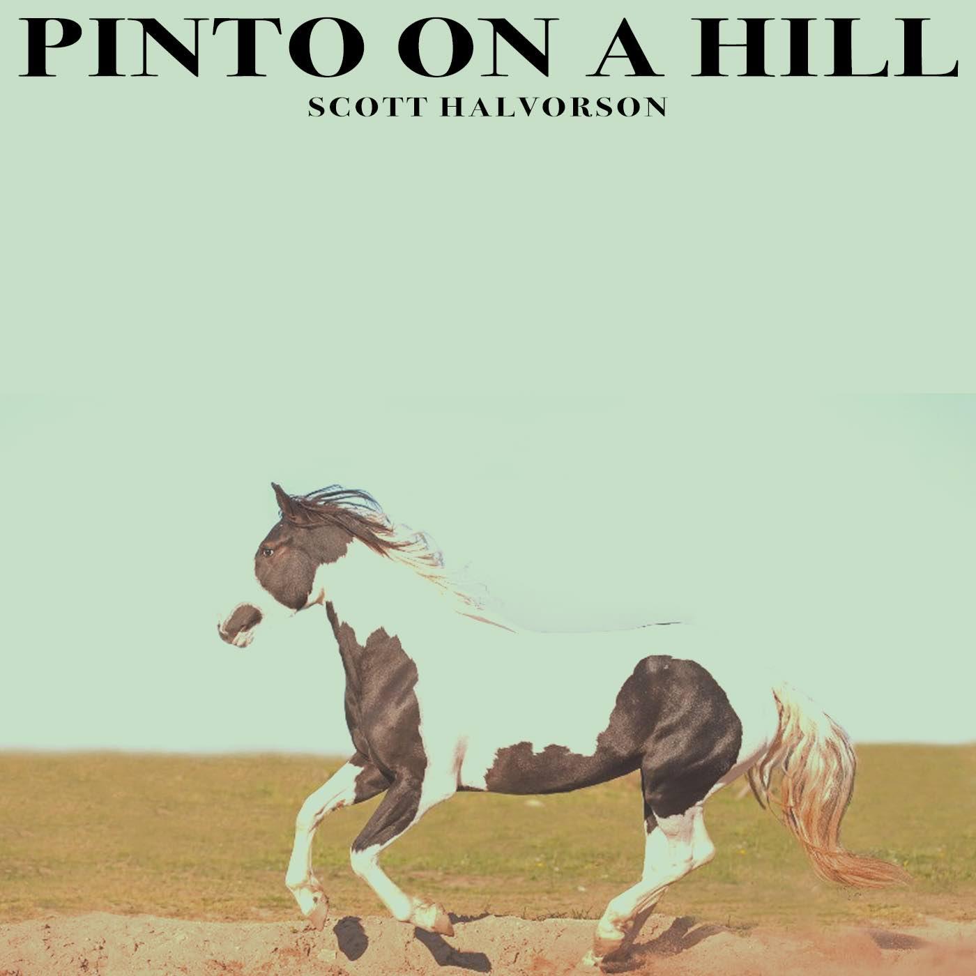 Pinto-on-a-Hill-Scott-Halvorson