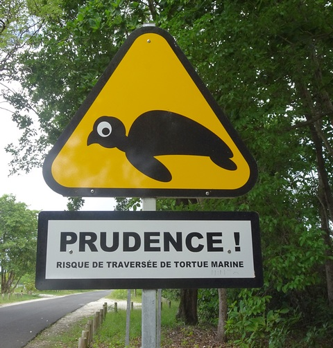 lundi soleil mai jaune risque de de traversée de tortue marine