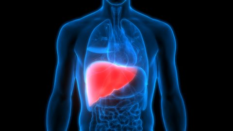Fatty Liver See how Weight Loss can help heal lasting damage caused by fatty liver - iStock 911340738 480x270 1 - See how Weight Loss can help heal lasting damage caused by fatty liver