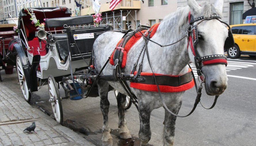 carriage ride, weird new york, weird nyc