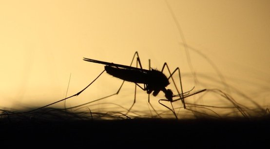 effective mosquito repellents