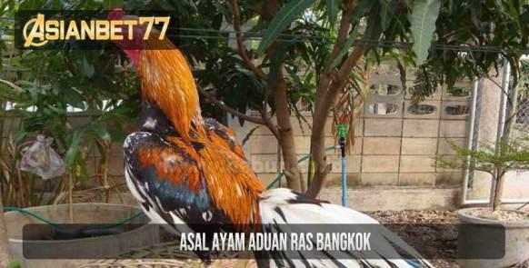 Asal Ayam Aduan Ras Bangkok