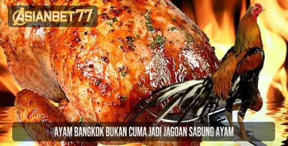 Ayam Bangkok Bukan Cuma Jadi Jagoan Sabung Ayam