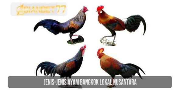 Jenis-jenis Ayam Bangkok Lokal Nusantara