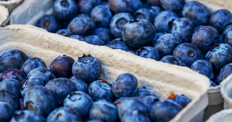 Blueberry Picking in the Capital Region [LIST]