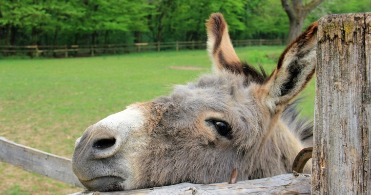 De-Stress with Donkeys in Upstate New York