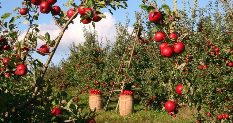 Long-Time Popular New York Orchard Is for Sale