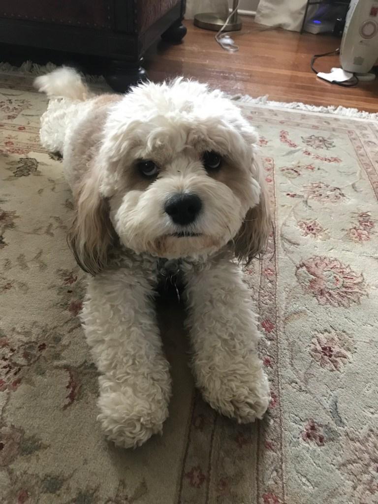 My dog would love Apollo!