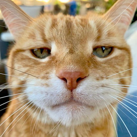 and orange tabby cat's face. He looks like he's not happy, like he's saying don't mess with me.