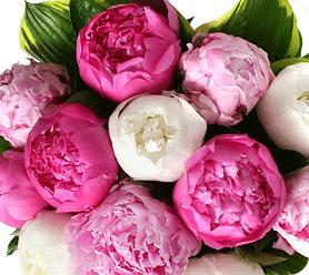 Peonies - popular wedding flower example