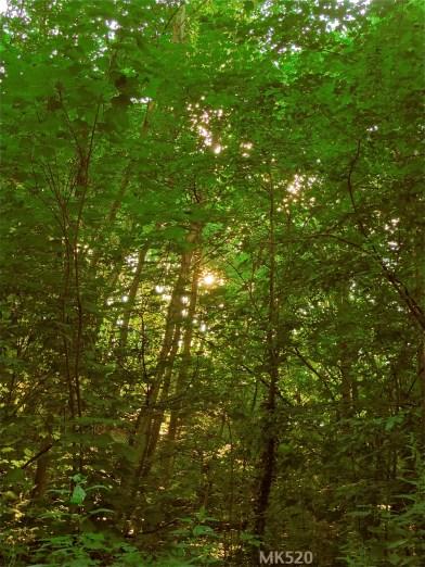 hier unten teilt sich die Sonne 520 Mal, durchdringt das Blätterwerk ... um auf dem Laubboden zu tanzen.