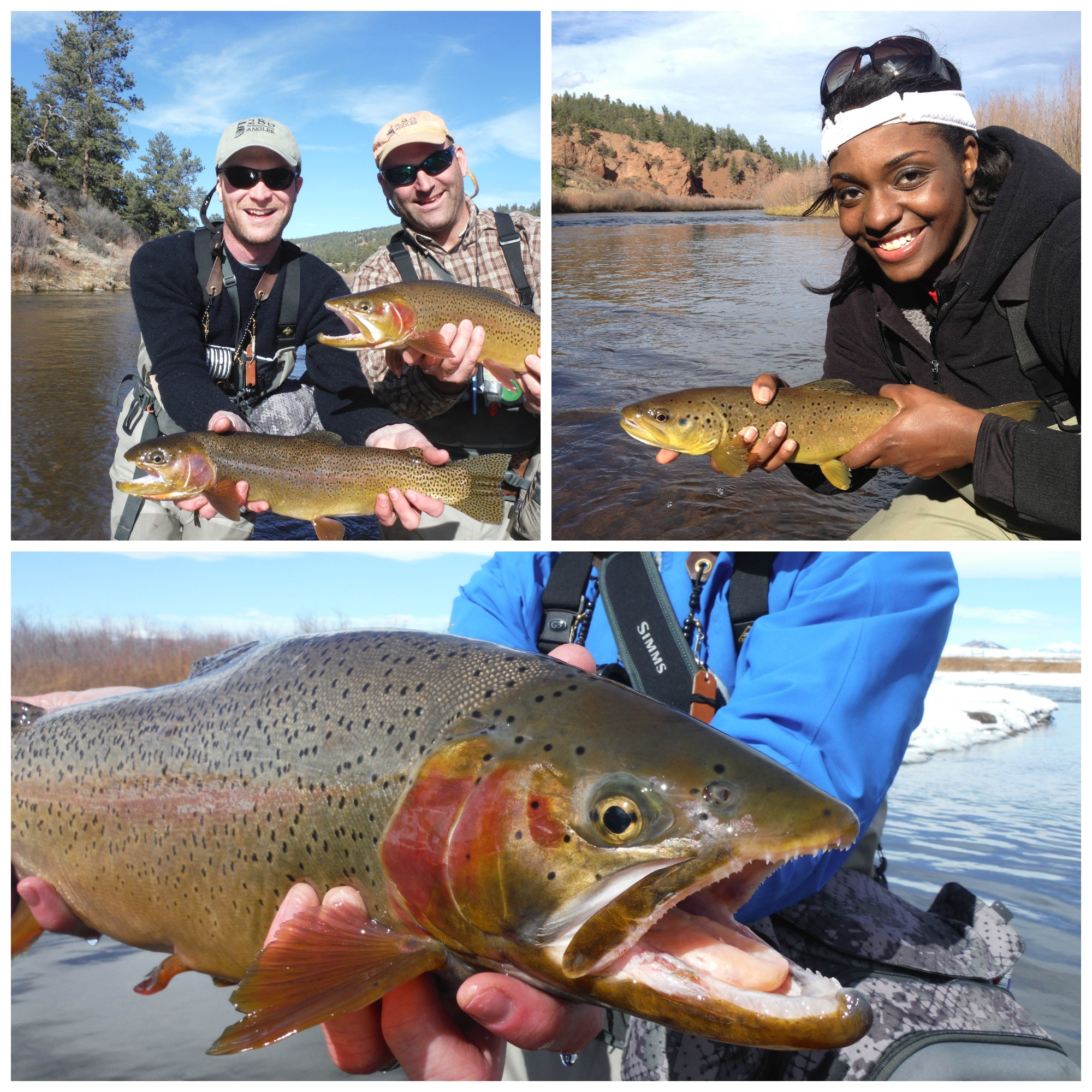 Colorado Public Water Fly Fishing - 5280 Angler