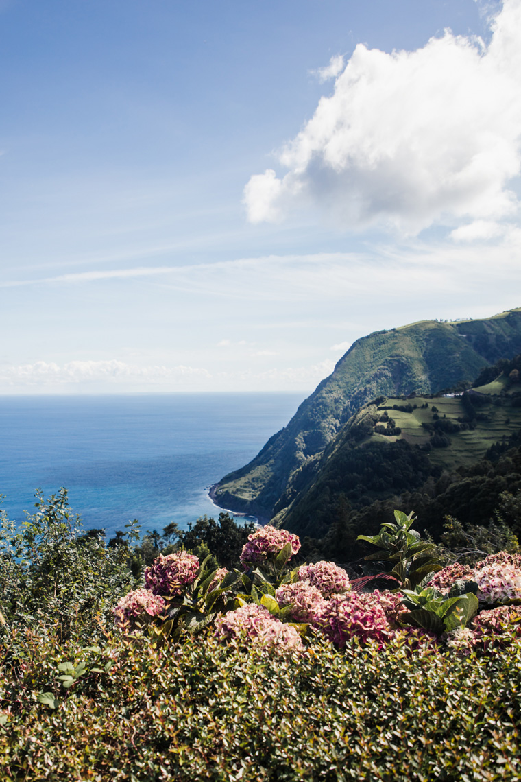 hydrangeas overlooking a cliff near the ocean