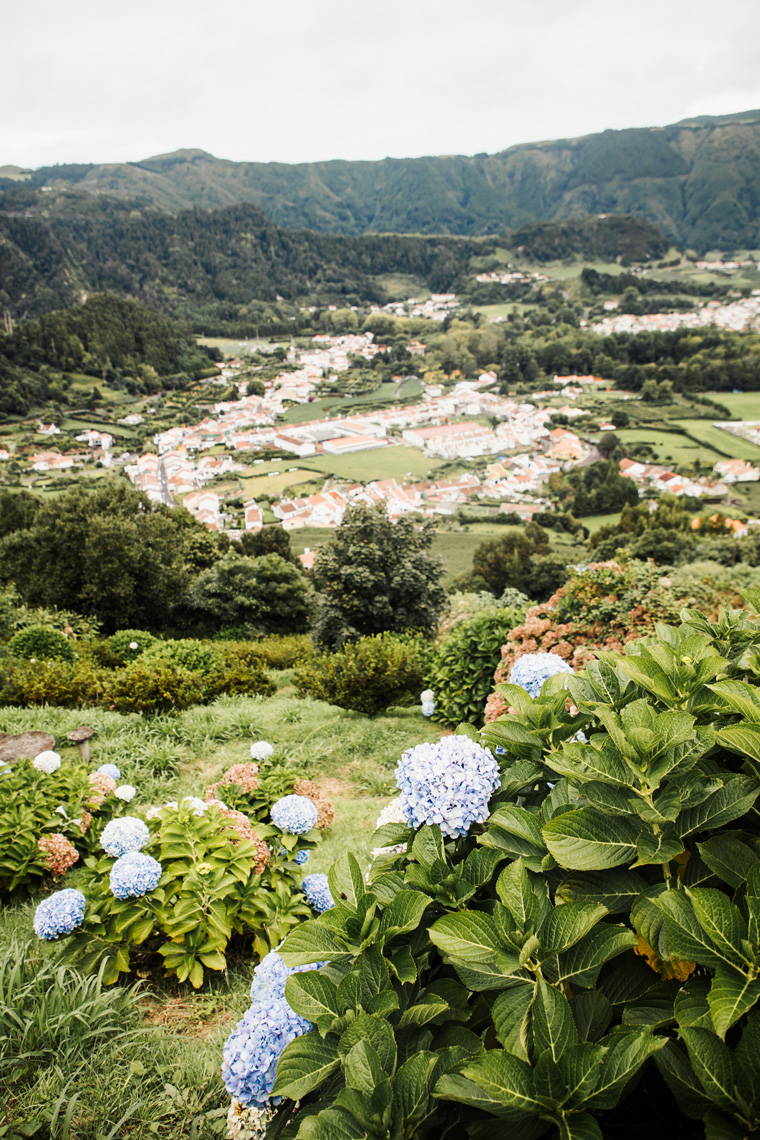 Viewpoint overlooking hydrangeas and red-roofed houses