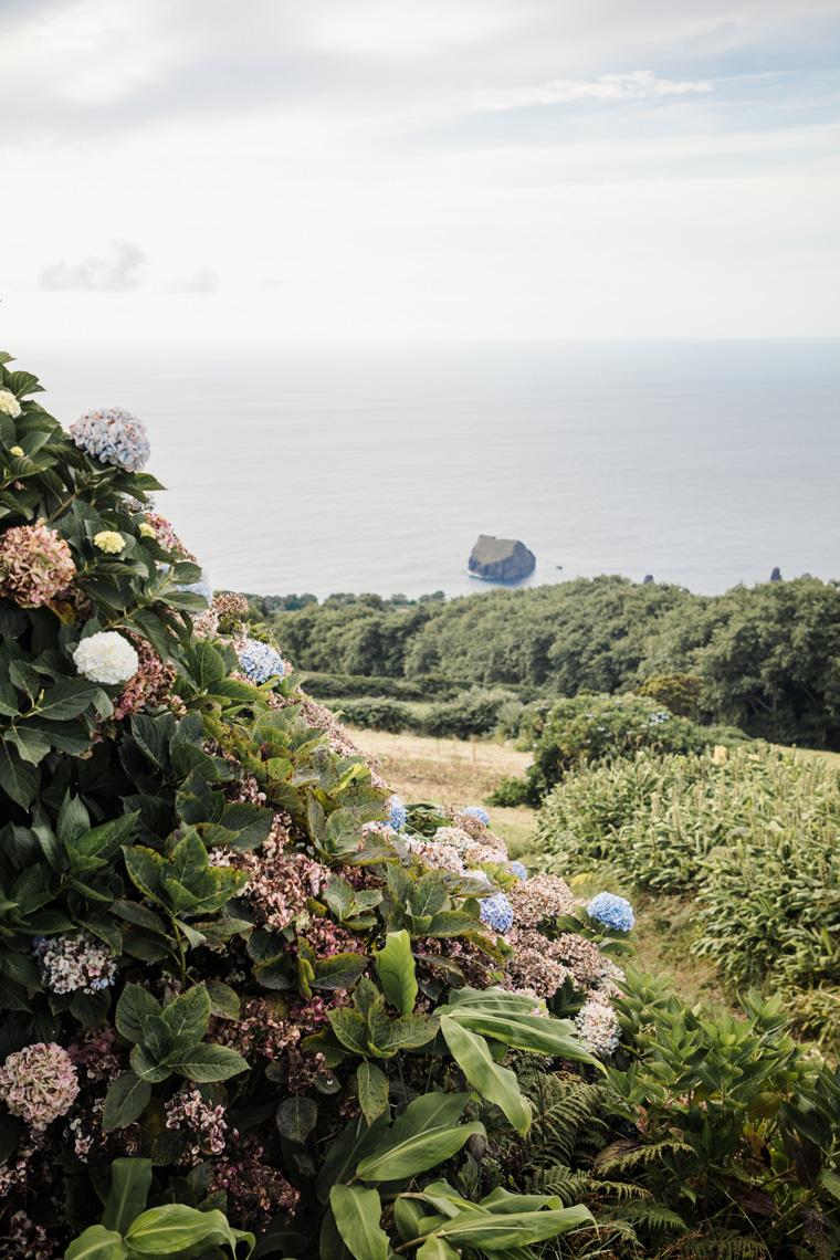hydrangeas overlooking the ocean