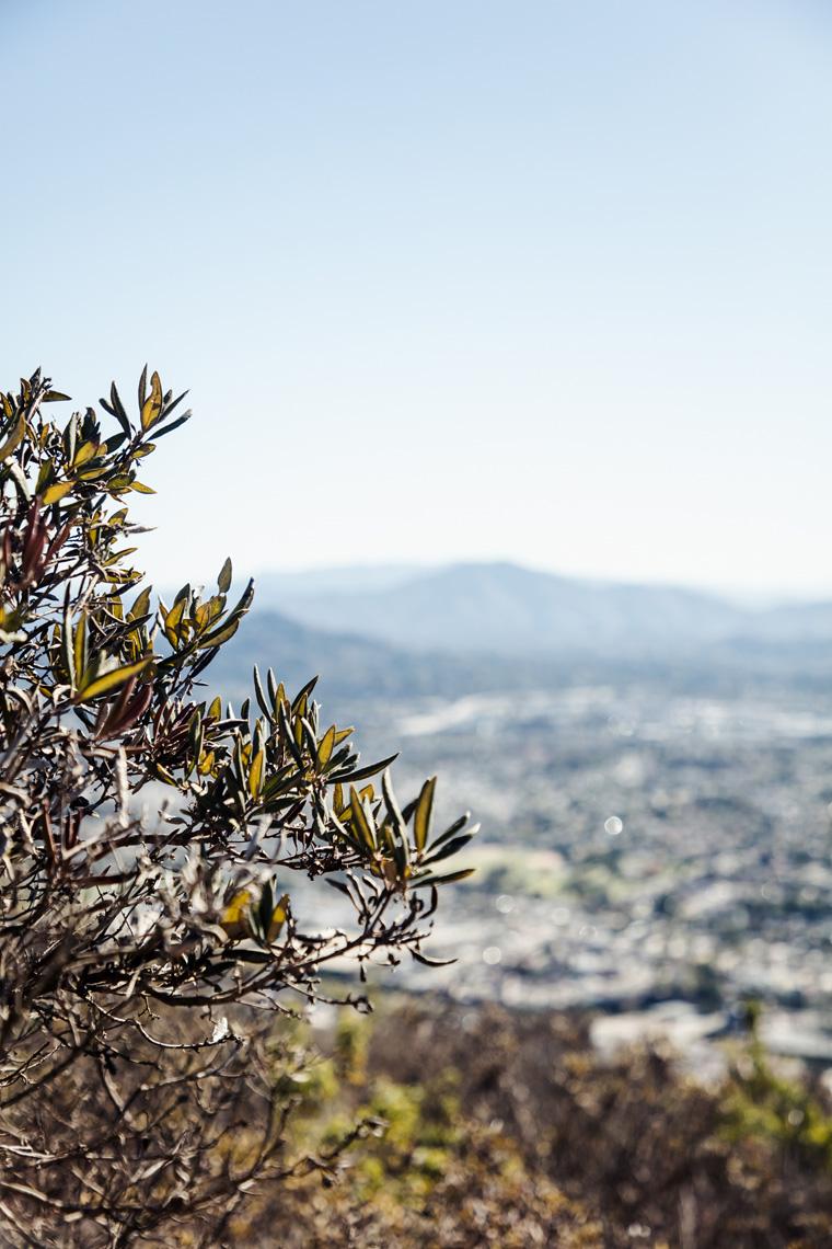 Tree overlooking mountains