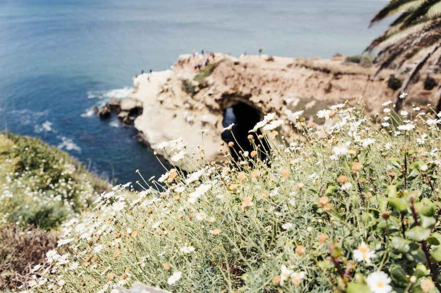 Flowers in front of cliffs and ocean