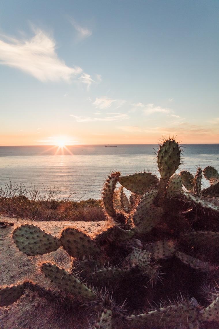 Sun setting behind a succulent