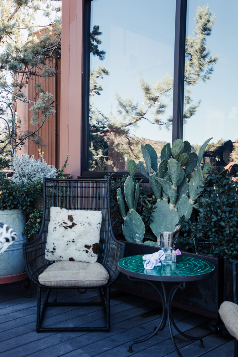 Patio chair and cactus