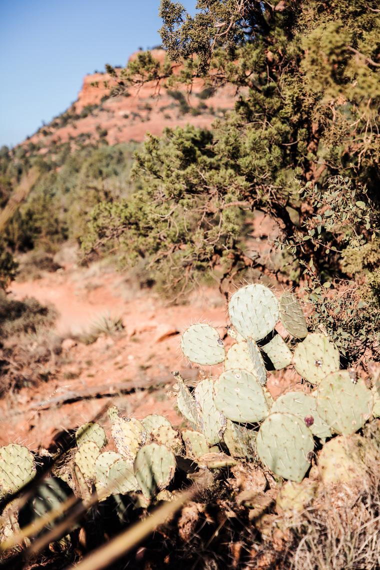 Cactus near Devil's Bridge Trail
