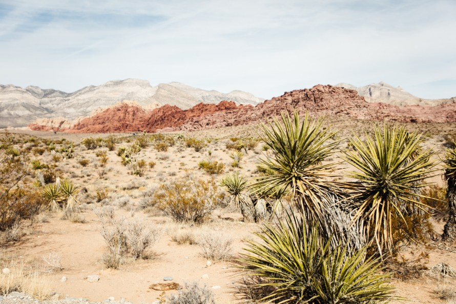Desert plants in Red Rock Canyon