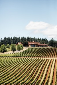 Domaine Serene winery