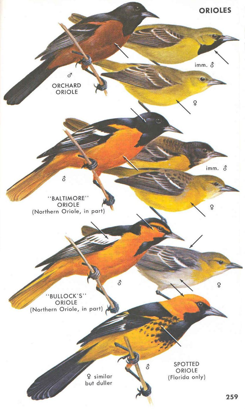Climate Change Could Push Oriole From Baltimore Baltimore Magazine