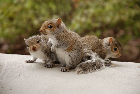 Trio of squirrels