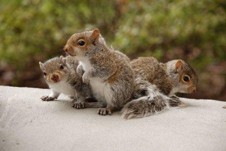 Trio of squirrels